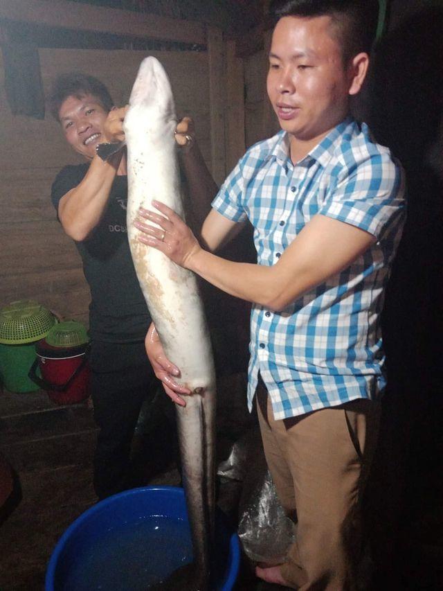 Bắt được cá chình 'khủng' dài 1,5 mét hiếm có