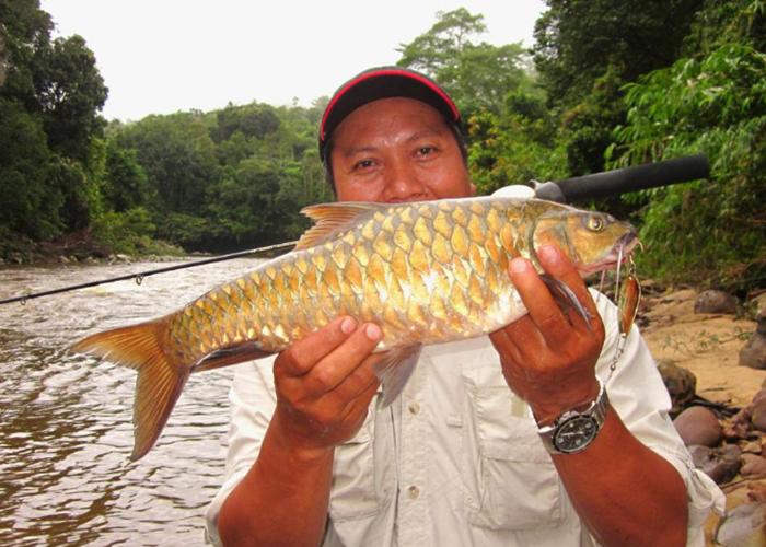 Cá đặc sản được mệnh danh 'vong bất liễu ngư' có giá quý như vàng