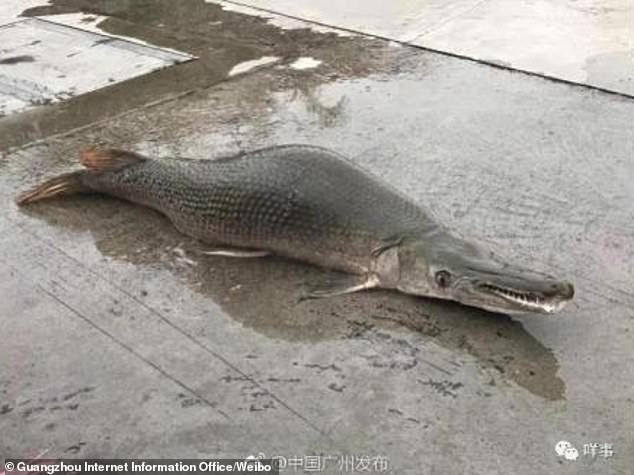 Sự thật về cá nửa rùa nửa rắn