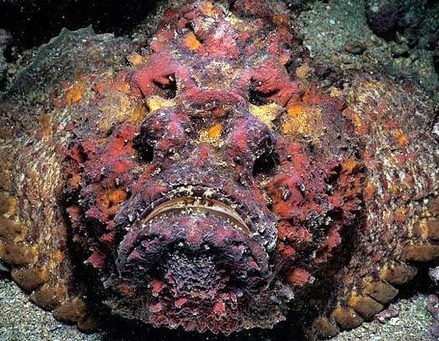 Từ 'Chúa tể' nọc độc dưới đại dương tới món ăn có giá trị ẩm thực