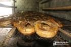 Đặc sản 'cá ông trời' có vảy như rắn tuyệt ngon ở Nghệ An