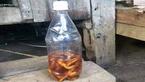 Uống rượu, ăn nấm lạ, 3 giáo viên bị ngộ độc cấp cứu