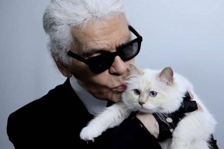 Ông hoàng thời trang có thể để lại tài sản 195 triệu USD cho 'người tình' mèo