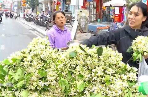 Gánh hàng rong bán hoa bưởi thu 6 triệu đồng/ngày