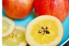 Táo mật 'siêu đắt' của Nhật Bản và 4 mùa kỳ công vun trồng