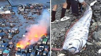Cá báo thảm họa liên tiếp xuất hiện ở Nhật