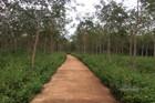 Đắk Nông: 4 cán bộ bị khởi tố vì 'chia' đất rừng 135 vô tội vạ