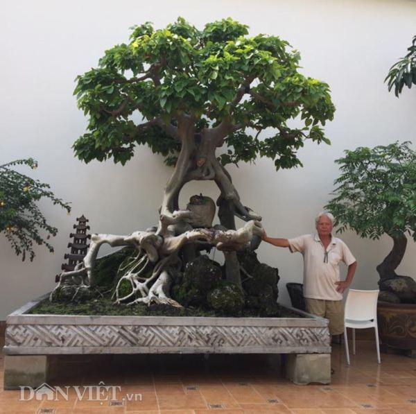Xôn xao Nam Định: Cây sanh cổ bán kèm cổng nhà giá 6.000 USD? Cay-sanh-co-ban-kem-cong-nha-gia-6000-usd-5