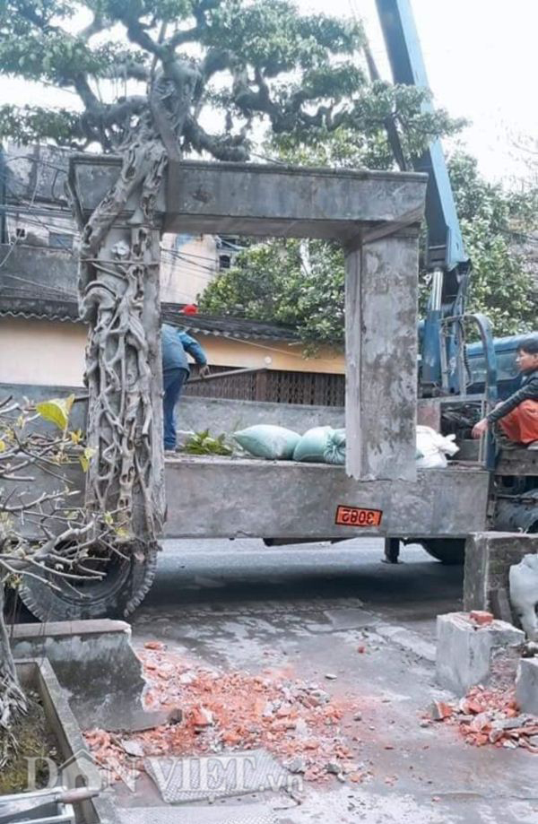Xôn xao Nam Định: Cây sanh cổ bán kèm cổng nhà giá 6.000 USD? Xon-xao-nam-dinh-cay-sanh-co-ban-kem-cong-nha-gia-6-000-usd