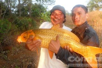 Săn 'báu vật' dưới Biển Hồ: Của hiếm, vật lạ ở hồ nước ngọt huyền bí