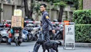 Chó nghiệp vụ rà soát an ninh tại khách sạn Melia
