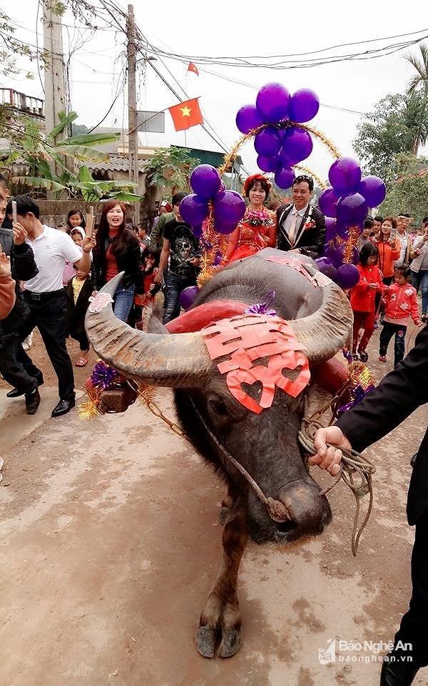 Xôn xao với màn rước dâu bằng xe trâu độc đáo ở Bắc Giang