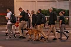 Mật vụ Mỹ đưa chó nghiệp vụ đến Nội Bài trước giờ đón Tổng thống Trump