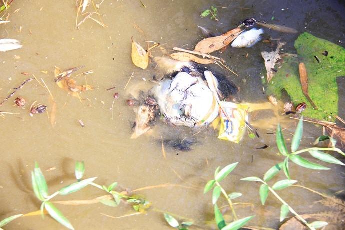 cá chết,ô nhiễm,Quảng Nam