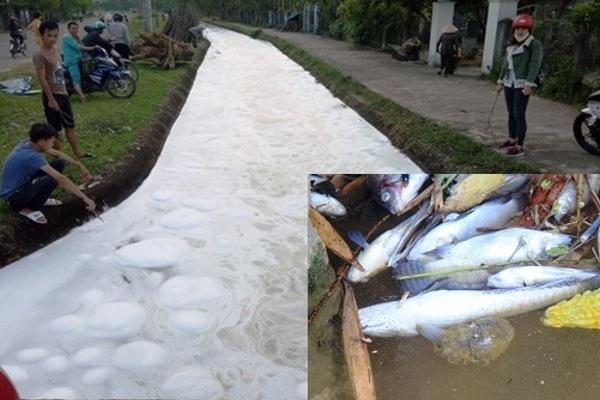 Dòng kênh sùi bọt, chảy đến đâu cá chết đến đó