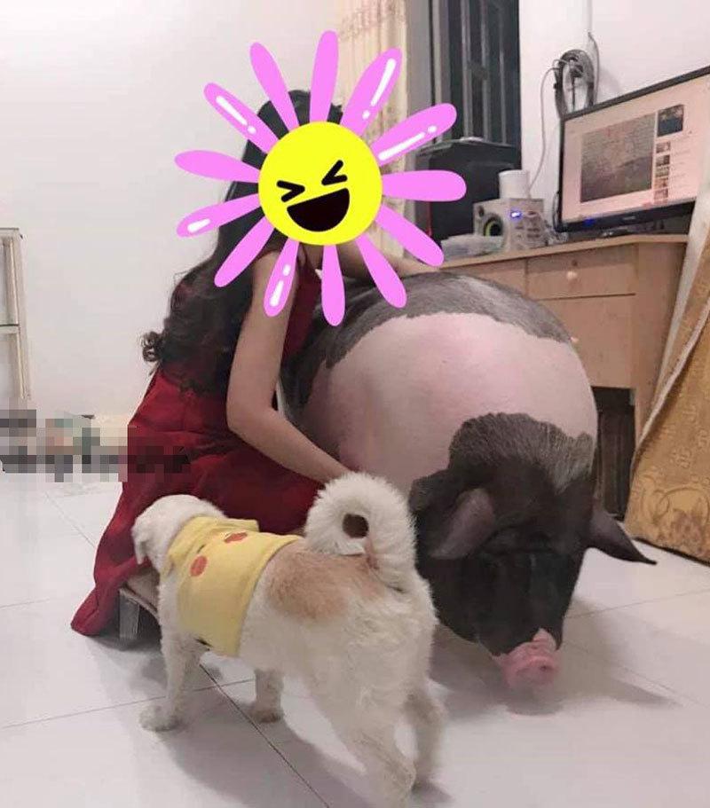 thú cưng,nuôi lợn,nuôi thú cưng