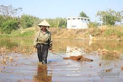 Đất vàng xây biệt thự triệu đô: Kệ nhà giàu, cụ ông vẫn dựng chòi cấy lúa