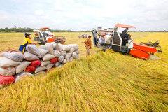 Vượt biến động tăng giá bất ngờ, thế mạnh Việt thu 3 tỷ USD