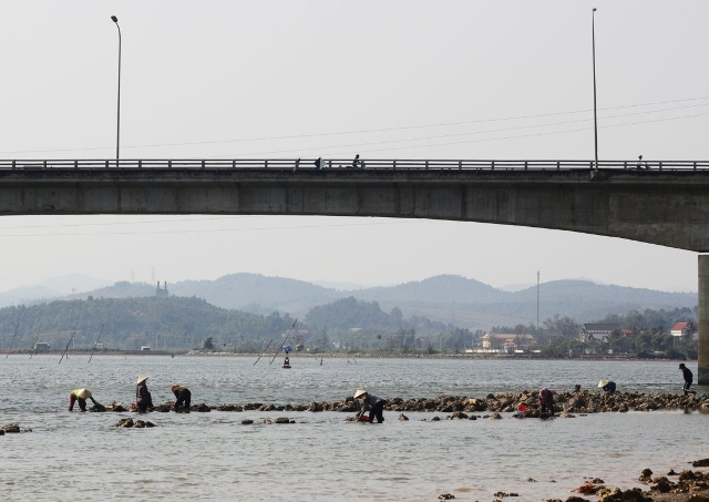 Săn 'thần dược' tăng cường bản lĩnh đàn ông bên dòng sông Gianh