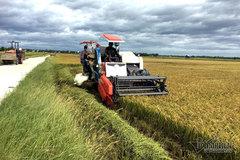 Chuyện lạ thế kỷ 21: Cả làng học trồng lúa như thời ông bà mình