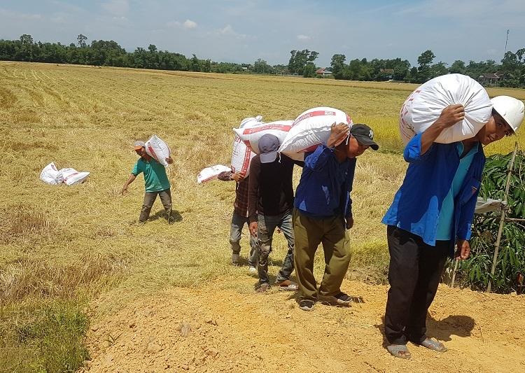 nông nghiệp hữu cơ,thái bình,nông dân