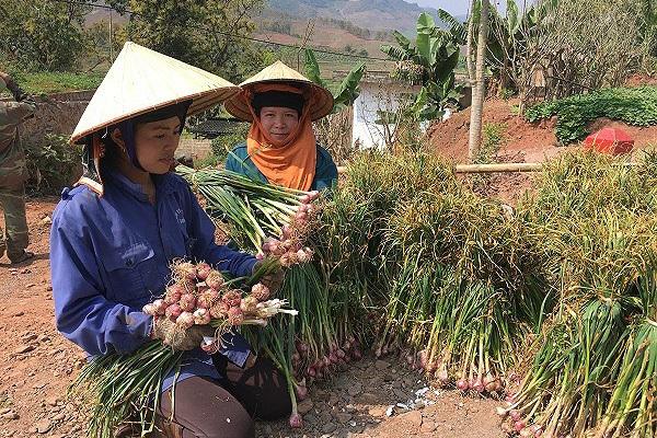 Chuyển đổi số và cơ hội của Việt Nam, không làm luôn thì đợi đến bao giờ?
