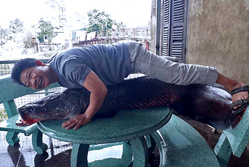 Sự thật bắt được thuỷ quái 110 kg trên sông Nhuệ: Loan tin xôn xao Hà Nội