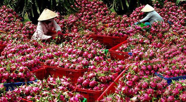 Doanh nhân Việt rất giỏi: Từ thời Mai An Tiêm, dưa hấu đi năm châu bốn biển