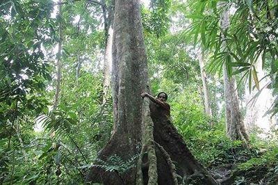 Choáng ngợp rừng lim xanh cổ thụ được coi như báu vật ở Bắc Giang