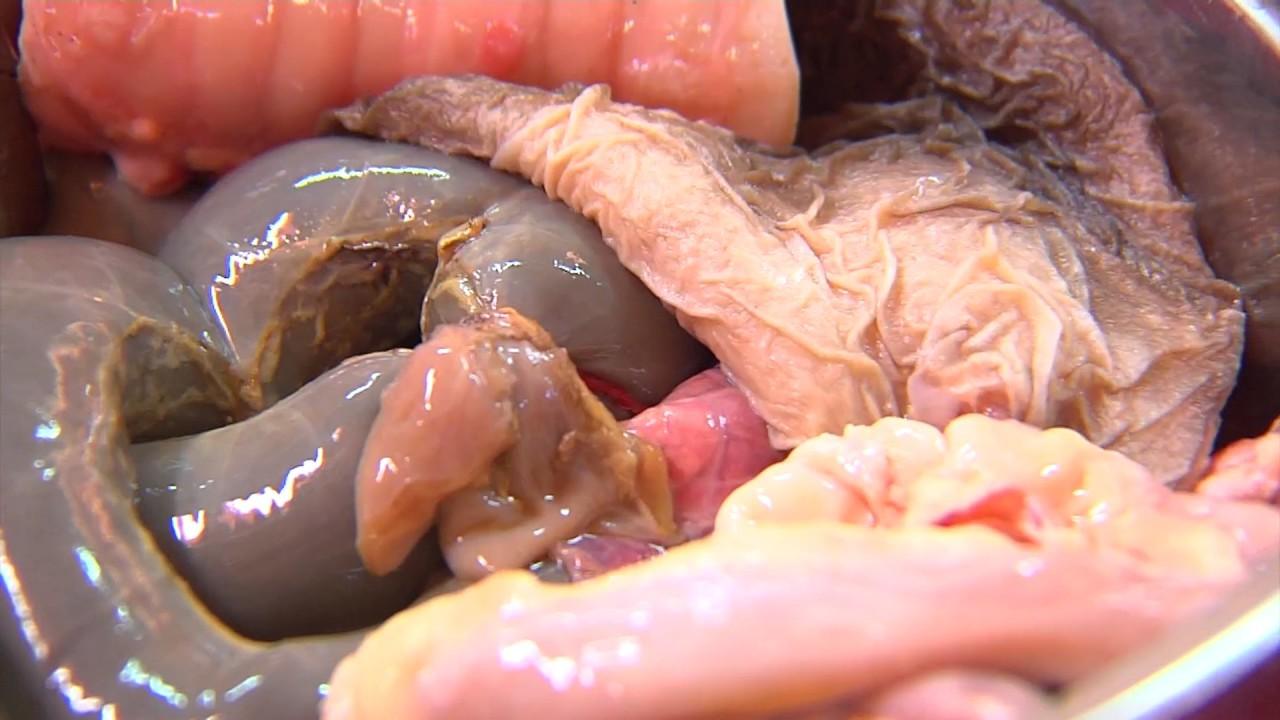 Sợ tái mặt đặc sản vùng cao kinh dị được làm từ phân non của động vật