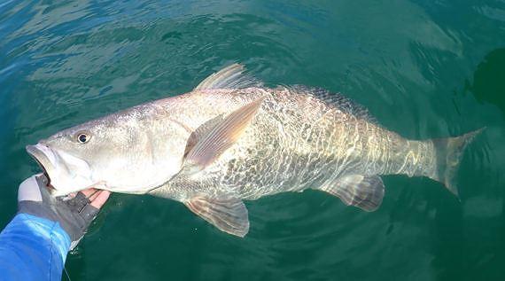 Buôn lậu bong bóng cá hiếm trị giá 2.700 tỷ đồng