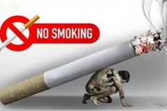 Chuyên gia quốc tế bật mí cứu cánh giảm tác hại thuốc lá