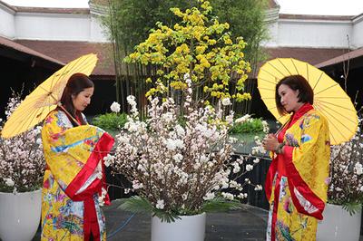 Xúng xính váy áo Nhật Bản bên hoa anh đào và mai vàng Yên Tử