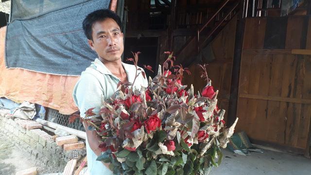 Rời Thủ đô lên phố núi trồng hoa hồng, chàng trai 'rinh' gần 1 tỷ mỗi năm