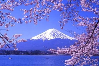 7 điểm ngắm hoa anh đào nở đẹp nhất ở Nhật Bản