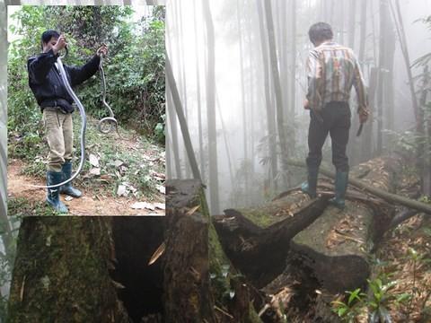 Run bần bật chuyện lao vào rừng sâu để vồ 'thần chết' ở Lào Cai