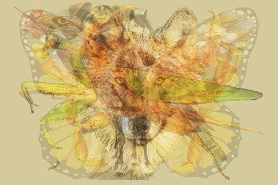 Con vật đầu tiên nhìn thấy tiết lộ bản chất thực sự của bạn