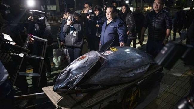 """Những con cá """"nhà giàu"""" có giá gấp chục lần siêu xe Ca-dat-4"""
