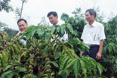 Tín dụng Agribank - 'bà đỡ' của cây cà phê Đắk Lắk