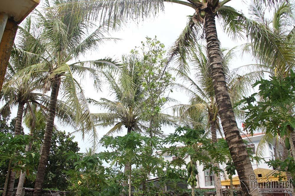 Thăm đảo có thứ 'quả vàng' được nâng niu giữa Trường Sa