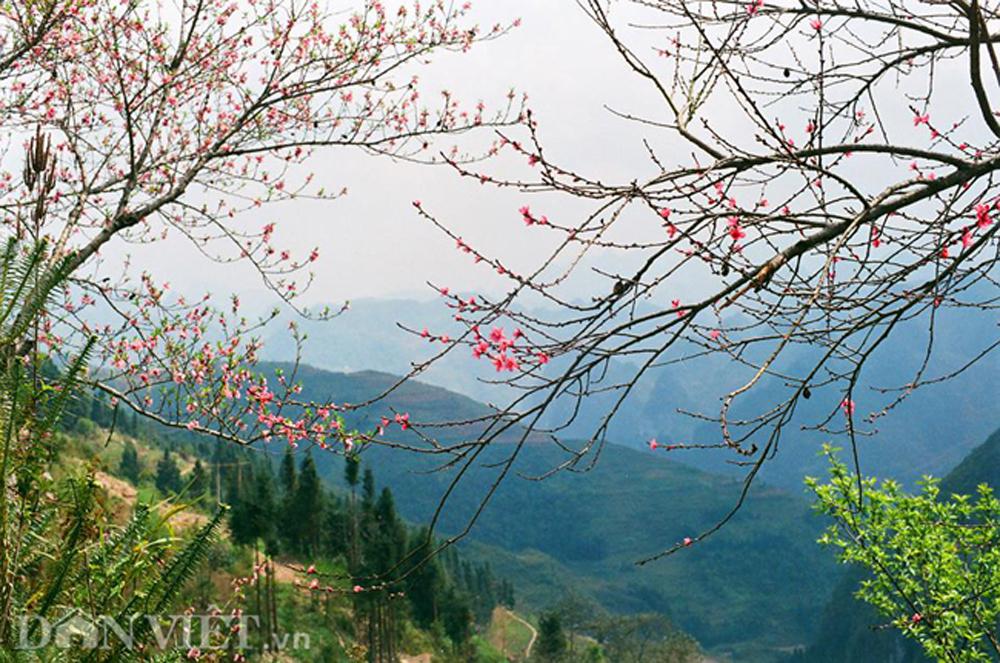 Ngắm hoa đào nở muộn tuyệt đẹp trên cao nguyên đá Đồng Văn
