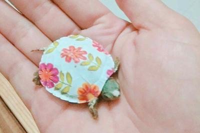 Nhỏ bằng mấy ngón tay nhưng những chú rùa cảnh tiền triệu này khiến nhiều người mê