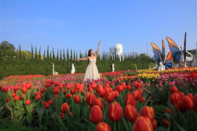 Phiêu lưu trong xứ sở hoa tulip trên đỉnh Bà Nà