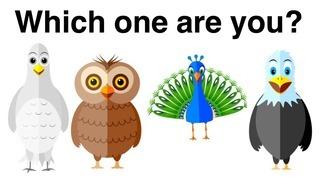 Loài chim bạn chọn tiết lộ tính cách thực sự