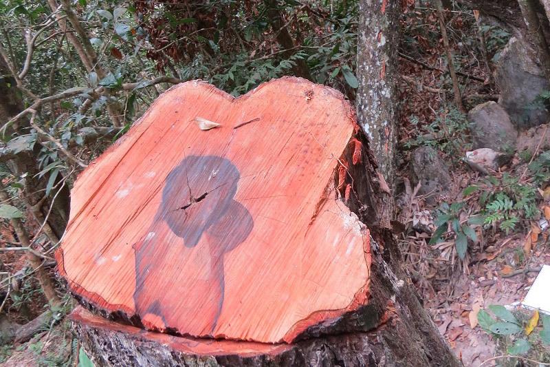 phá rừng,Phong Nha Kẻ Bàng,gỗ mun sọc