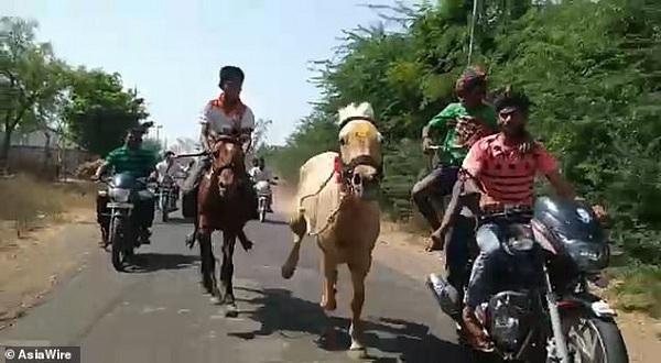 Clip nóng: Đang phi như gió, ngựa bất ngờ hất văng kỵ sĩ