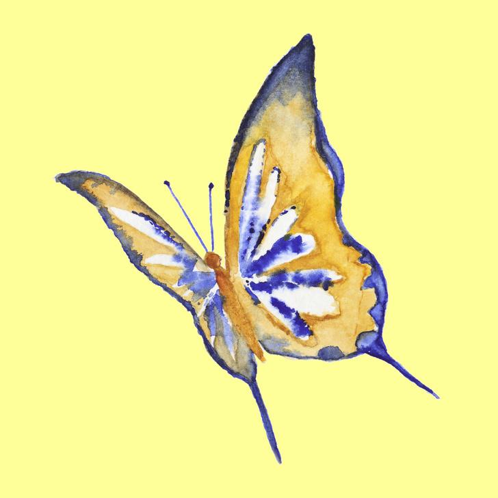 Loài bướm bạn chọn tiết lộ nhiều điều ẩn giấu trong tính cách