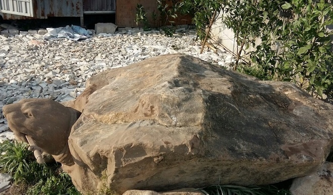 rùa đá