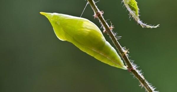côn trùng,đặc sản kinh dị