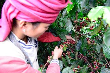 Ai bảo cà phê ngon chỉ dành cho xuất khẩu?